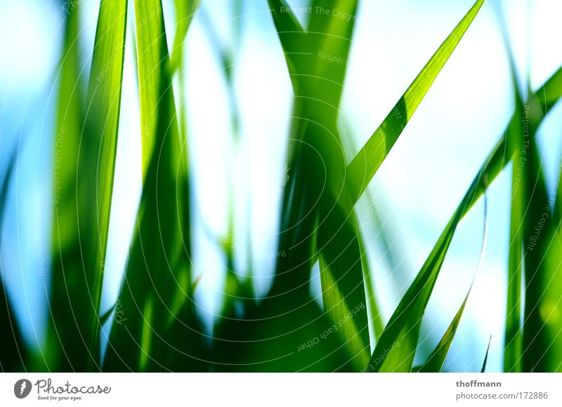 Nature Green Plant Summer Leaf Meadow Grass Park Fresh Pure Close-up Illuminate Macro (Extreme close-up) Blade of grass Idea Beautiful weather