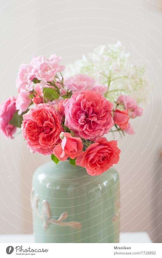 love of roses Rose Esthetic Vase Bouquet Rose blossom Hydrangea blossom Mother's Day Valentine's Day Love Birthday Pottery Pink Arrange Decoration Colour photo