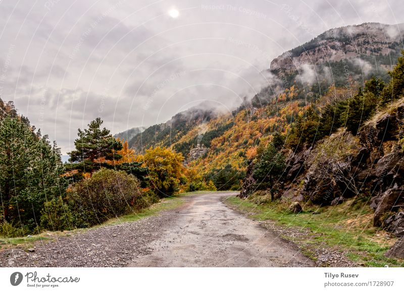 Autumn in the Pyrenees Sky Nature Blue Colour Beautiful Green Landscape Red Clouds Leaf Forest Mountain Environment Natural Park