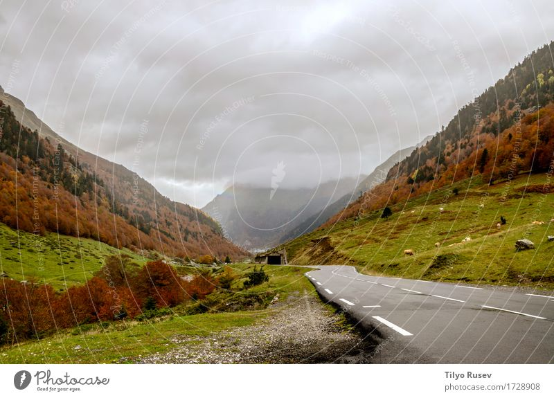 Pyrenees Atlantiques Nature Plant Colour Beautiful Green Sun Tree Landscape Red Leaf Forest Environment Street Yellow Lanes & trails Autumn