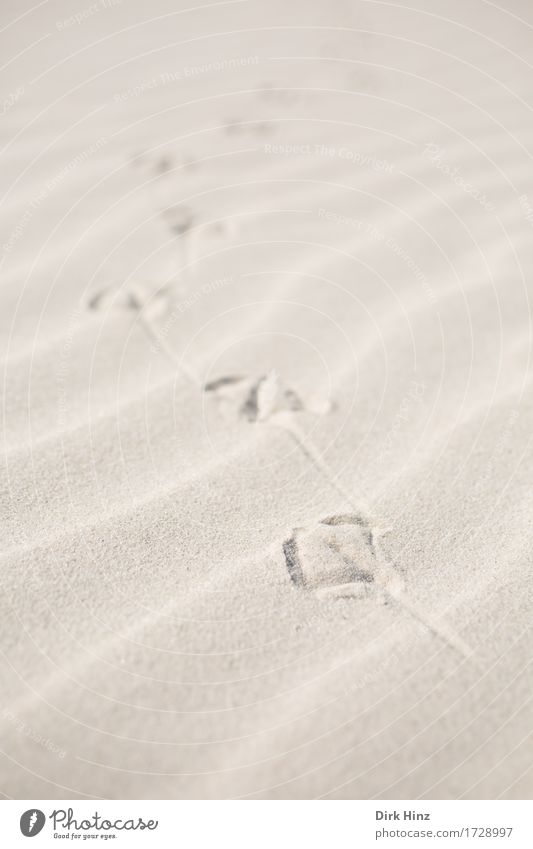 Traces in the sand Life Senses Vacation & Travel Tourism Trip Summer Summer vacation Sun Beach Ocean Island Environment Nature Landscape Sand Coast North Sea