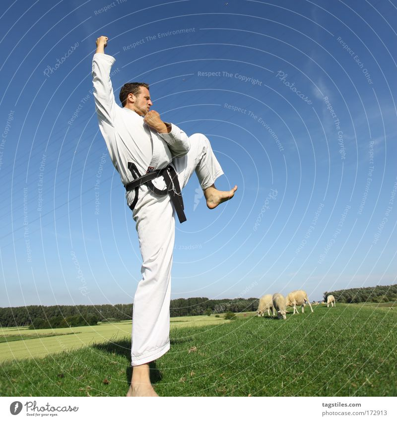 Nature Black Sports Think Power Force Strong Testing & Control Sheep Fight Experience Belt Fist Martial arts Tread Dike