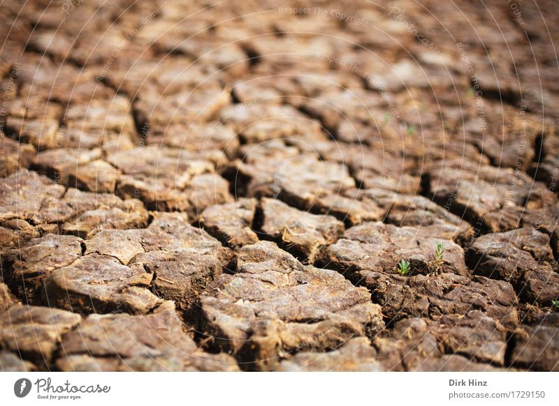 Drought / drought Environment Nature Landscape Plant Earth Climate Climate change Leaf Bog Marsh Desert Dry Brown Environmental protection Lose Change Dehydrate