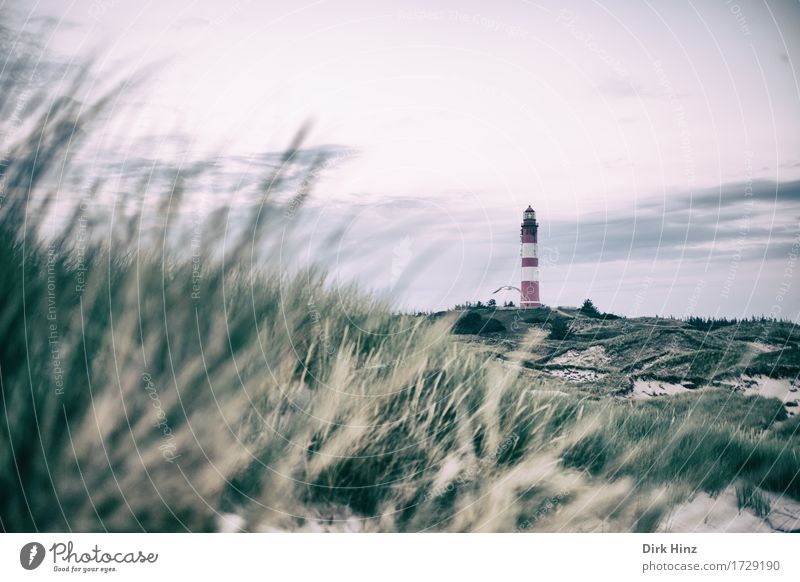 Lighthouse Wittdün / Amrum Cure Vacation & Travel Tourism Trip Far-off places Freedom Summer Summer vacation Beach Ocean Island Navigation Sign Road sign Hope