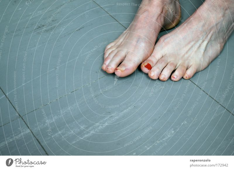 Old Red Adults Cold Life Gray Feet Animal foot Stand Ground Floor covering Touch Barefoot Toes Varnished Toenail