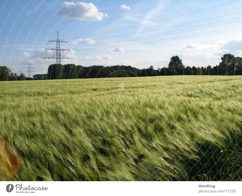 The wind the heavenly child Wind Field Electricity pylon Sun golden field Balu Sky