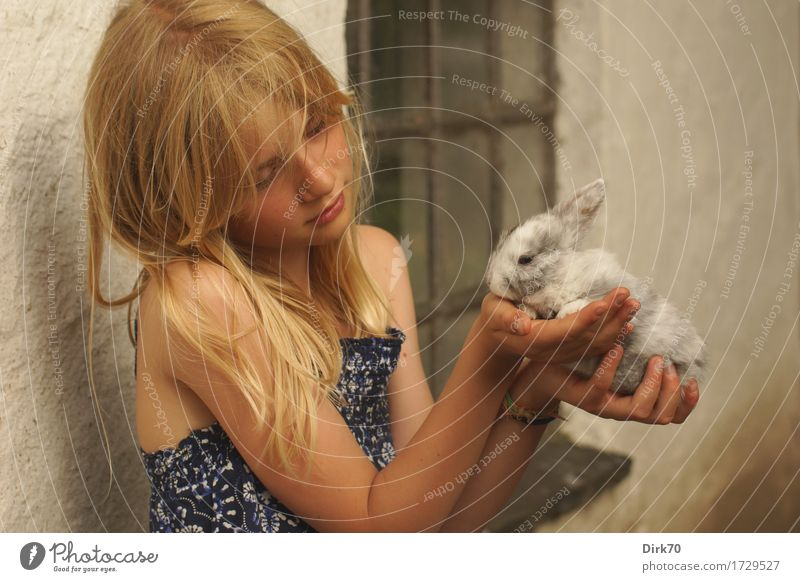 In tender hands: Girl with rabbit in her hands. Agriculture Forestry Human being Child 1 8 - 13 years Infancy Summer Farm Wall (barrier) Wall (building) Window