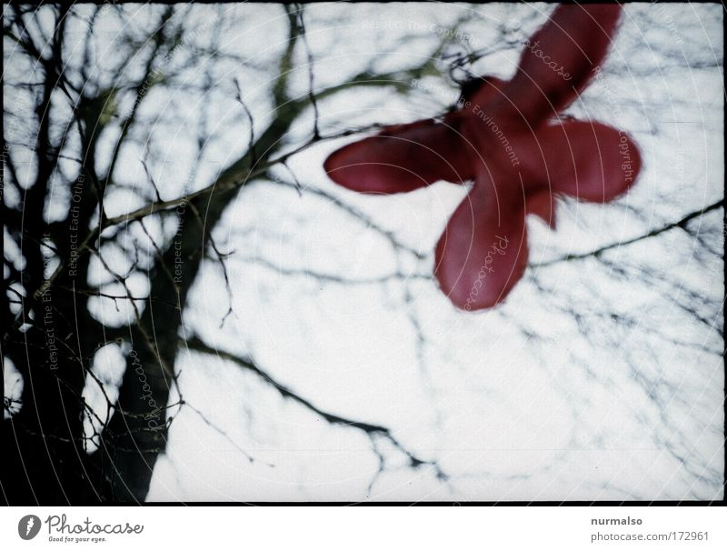 Red butterfly in tristess Colour photo Morning Art Sculpture Environment Nature Winter Bad weather Tree Park Butterfly To fall Flying Hang Esthetic Simple