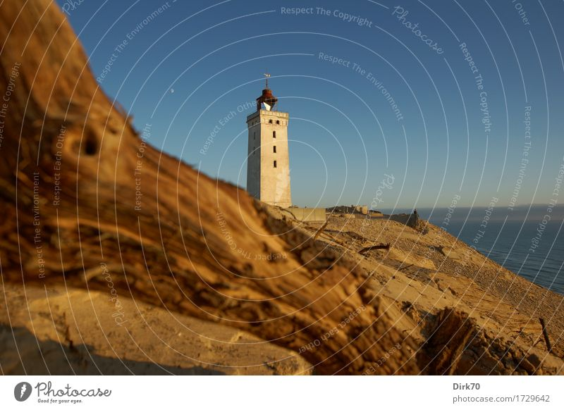 Rubjerg Knude Fyr in the evening light Vacation & Travel Summer vacation Environment Nature Landscape Cloudless sky Beautiful weather Branch Coast North Sea