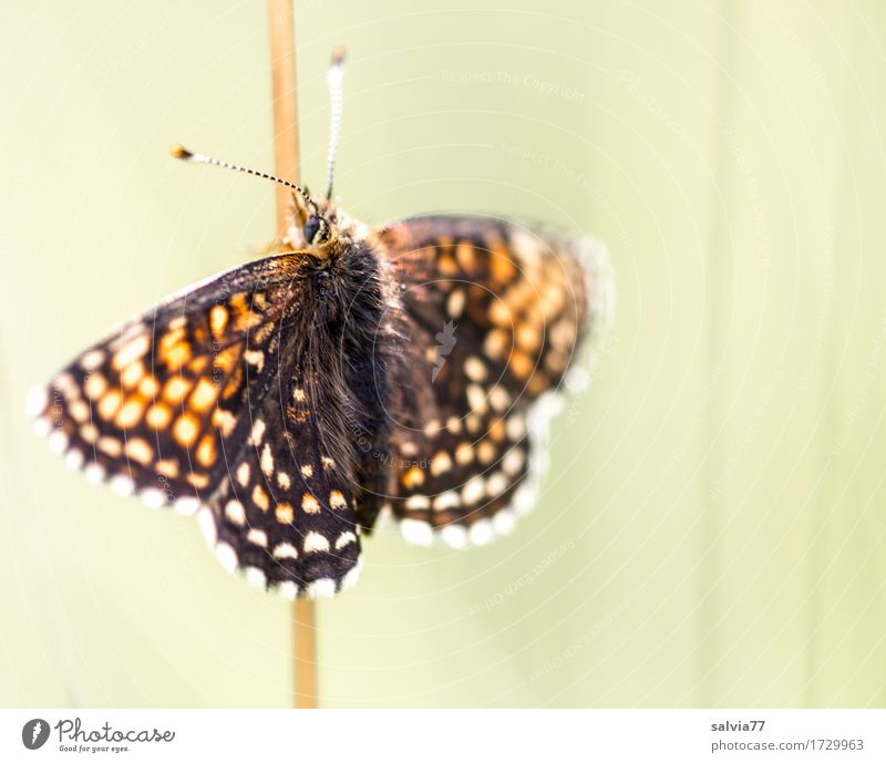Nature Summer Beautiful Sun Relaxation Animal Environment Warmth Love Happy Wild animal To enjoy Wing Warm-heartedness Beautiful weather Insect