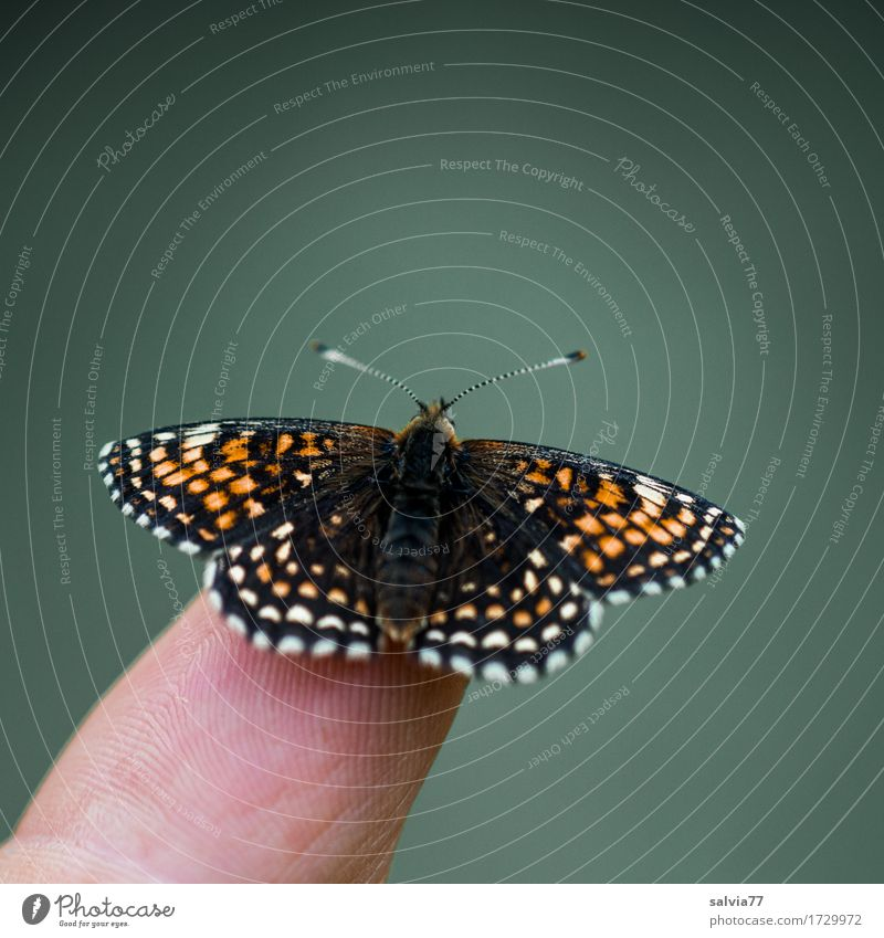 he's about to...? Fingers Environment Nature Animal Summer Bog Marsh Wild animal Butterfly Wing Scales Insect 1 Observe Touch Flying To enjoy Crawl Esthetic