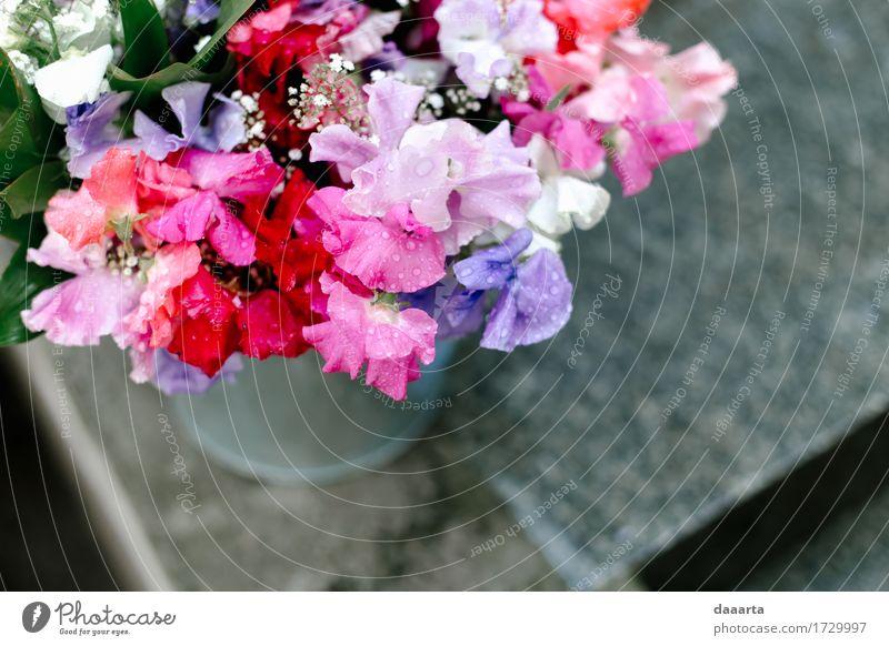 rain drop flowers Nature Plant Summer Flower Joy Environment Warmth Life Love Emotions Lifestyle Feminine Style Freedom Feasts & Celebrations Moody