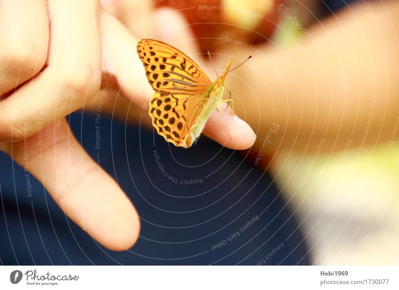 Butterfly sits on the index finger of a hand Hand Fingers Nature 1 Animal Touch Beautiful Near Orange Trust Safety (feeling of) Love of animals Serene Patient