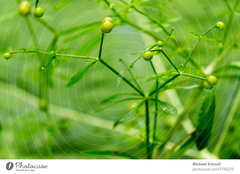 green Environment Nature Plant Bud Healthy Natural Green Beginning Colour photo Exterior shot