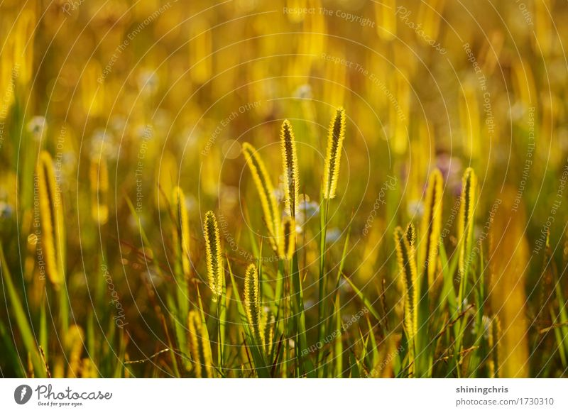 glow Nature Landscape Animal Sunlight Summer Weather Beautiful weather Grass Meadow Field Illuminate Warmth Gold Green Moody Together Attachment Colour photo