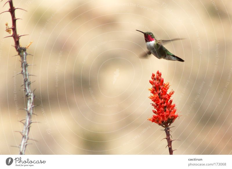 Plant Red Animal Moody Bird Exotic Motion blur Wild plant Hummingbirds