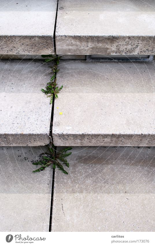 Old Plant Loneliness Cold Architecture Gray Lanes & trails Sadness Park Time Concrete Arrangement Stairs Modern Gloomy Culture