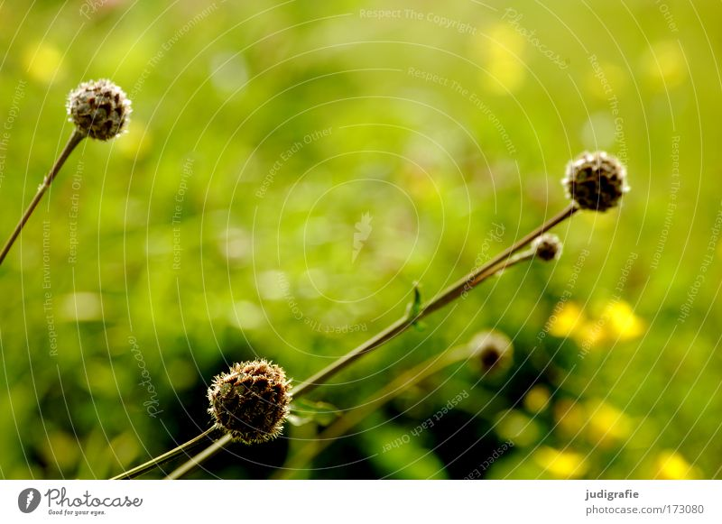 Nature Green Plant Summer Meadow Grass Spring Park Environment Fresh Growth Round Wild plant