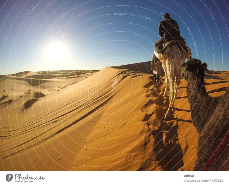 Sahara II Ride Vacation & Travel Tourism Trip Adventure Far-off places Freedom Expedition Summer Summer vacation Sun Beach Young man Youth (Young adults) Man