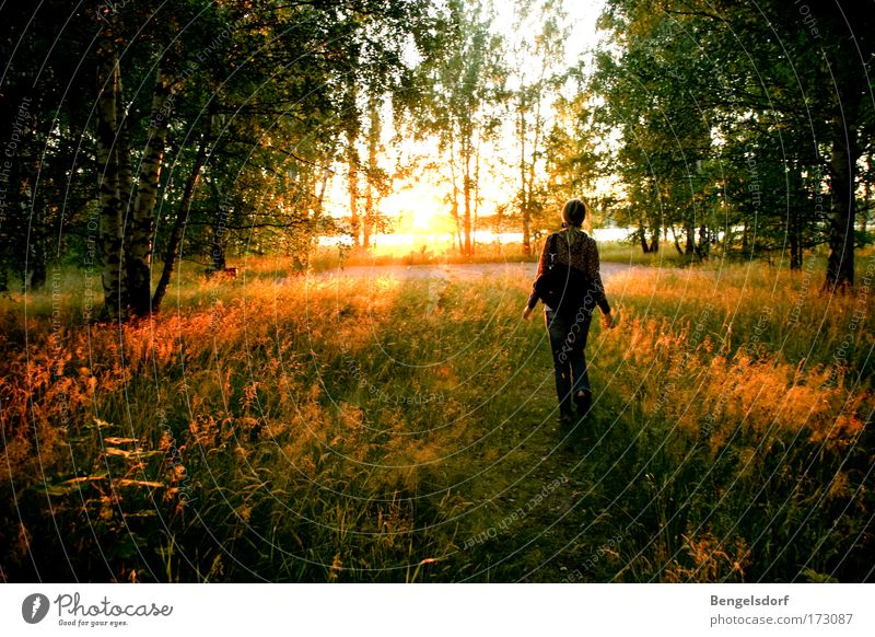 Human being Nature Tree Sun Loneliness Calm Forest Freedom Grass Happy Earth Trip To go for a walk Individual Idyll Beautiful weather