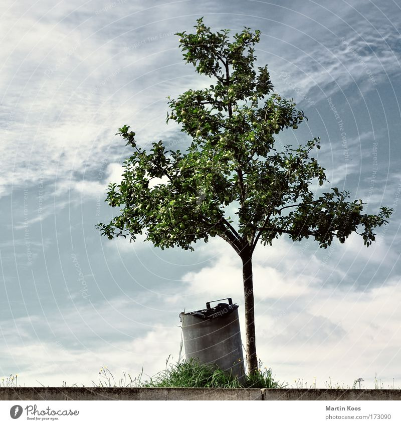 Nature Old Tree Nutrition Environment Garden Grass Food Metal Stairs Climate Trash Harvest Environmental pollution Packaging Trash container