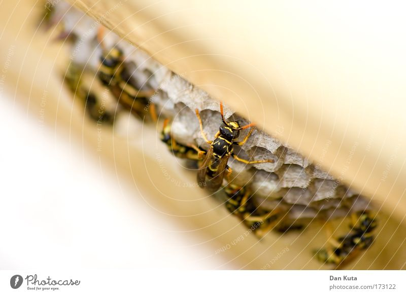 Architectural house v1.0 Populated House (Residential Structure) Facade Terrace Animal Wasps Wasps' nest Insect Group of animals Flock Work and employment Build
