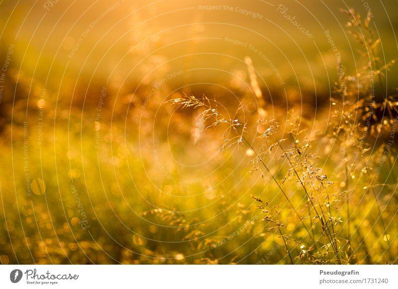 Nature Plant Summer Sun Landscape Calm Grass Moody Rain Contentment Field Esthetic Drops of water Beautiful weather Dusk Wild plant