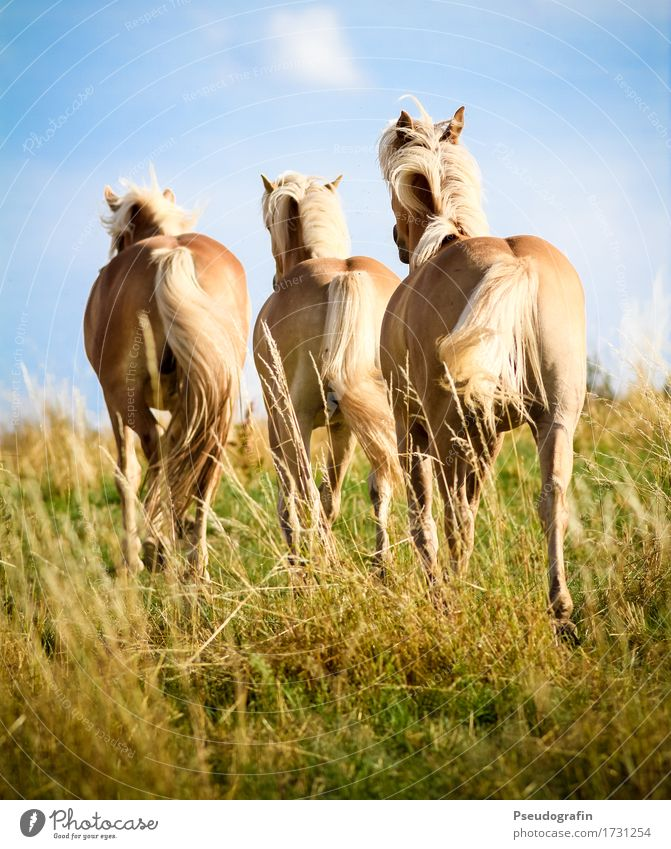 Nature Beautiful Animal Joy Natural Movement Moody Brown Going Together Friendship Power Gold Blonde Esthetic Happiness