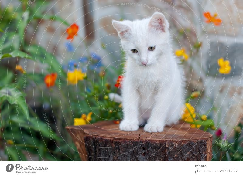 Small white cat Beautiful Summer Garden Nature Animal Flower Grass Fur coat Pet Cat Sit Cute Green White Kitten Domestic isolated images Striped fluffy young