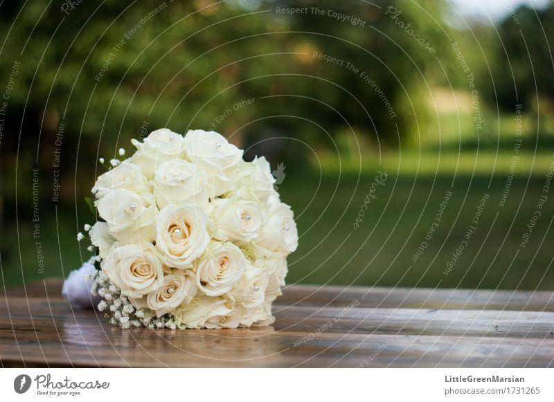 The bride's bouquet [1] Environment Nature Plant Flower Grass Bushes Rose Blossom Garden Park Wood Esthetic Elegant Glittering Bright Beautiful Multicoloured