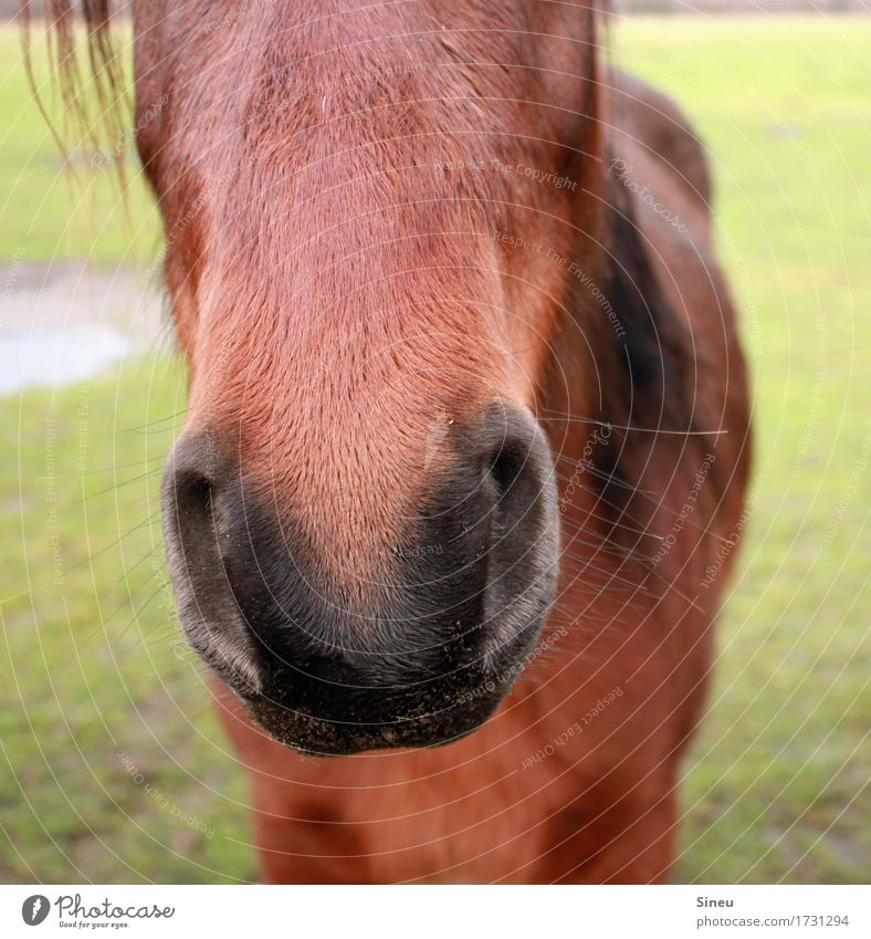 Nature Beautiful Animal Meadow Garden Contentment Power Cute Observe Curiosity Horse Near Trust Animal face Cuddly Ride