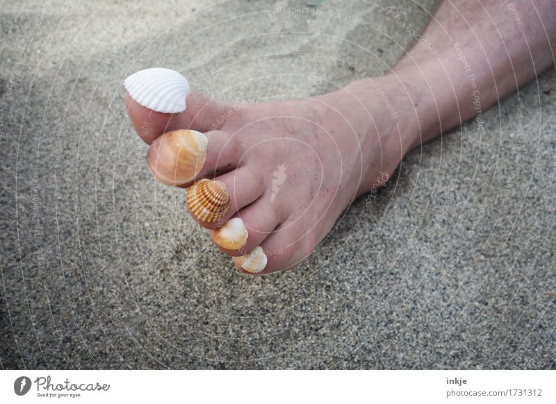 It's collecting time. Harmonious Senses Relaxation Calm Leisure and hobbies Vacation & Travel Summer Summer vacation Sun Sunbathing Beach Adults Life Feet