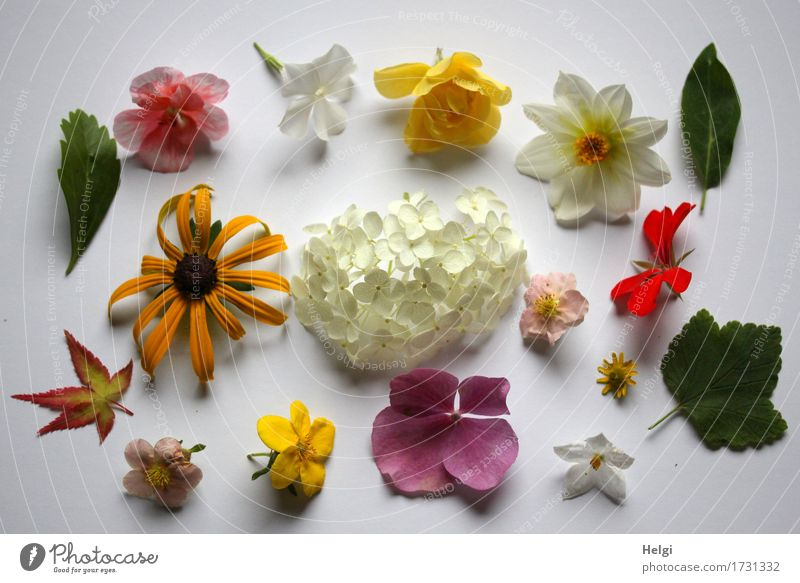anthropomorphous Nature Plant Summer Leaf Blossom Garden Collection Blossoming Lie Fresh Uniqueness Yellow Green Pink Red White flower collection Colour photo