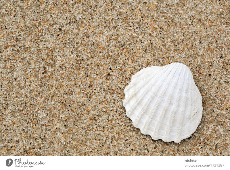 White shell on the beach Beach Sand Water North Sea Baltic Sea Ocean Contentment Calm nostalgia ocean waves sandy beach vacation white Mussel holidays
