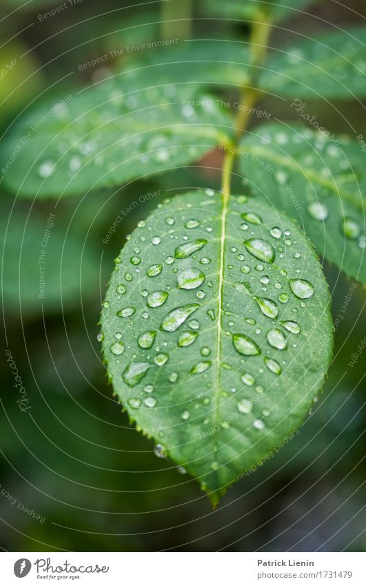 Regentag Nature Plant Colour Leaf Natural Garden Bright Rain Fresh Wet Drop