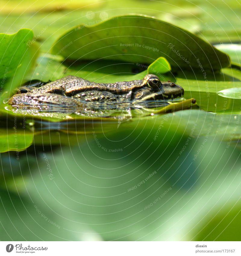Nature Water Green Plant Calm Leaf Animal Relaxation Wait Glittering Environment Wet Break Lie Wild Wild animal