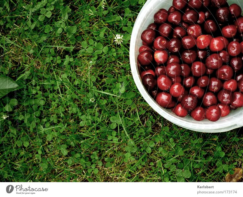 Nature Summer Nutrition Grass Garden Food Healthy Work and employment Fruit Design Fresh Sweet Harvest Joie de vivre (Vitality) Fragrance To enjoy