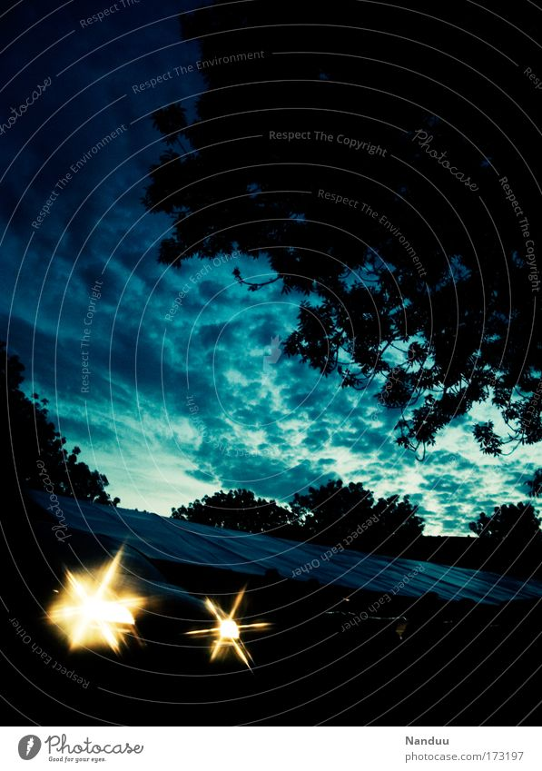 Tree Blue Clouds Star (Symbol) Floodlight Summer evening