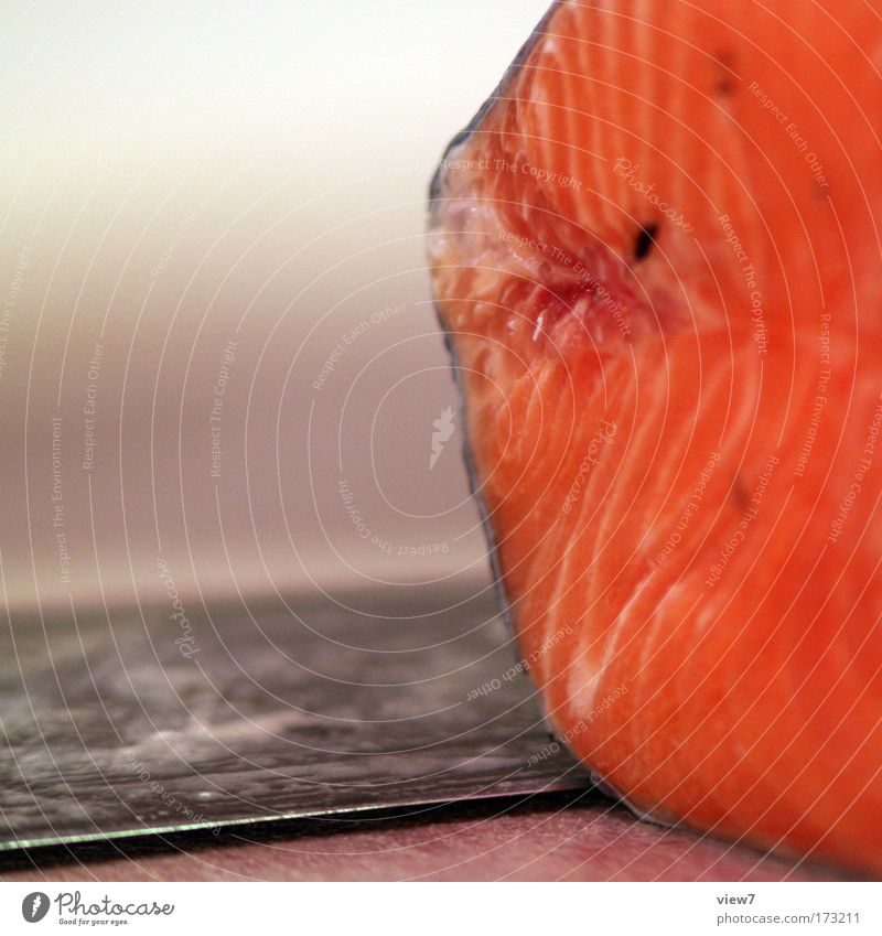 salmon Colour photo Multicoloured Interior shot Macro (Extreme close-up) Deserted Copy Space left Shallow depth of field Food Fish Nutrition Cutlery Knives