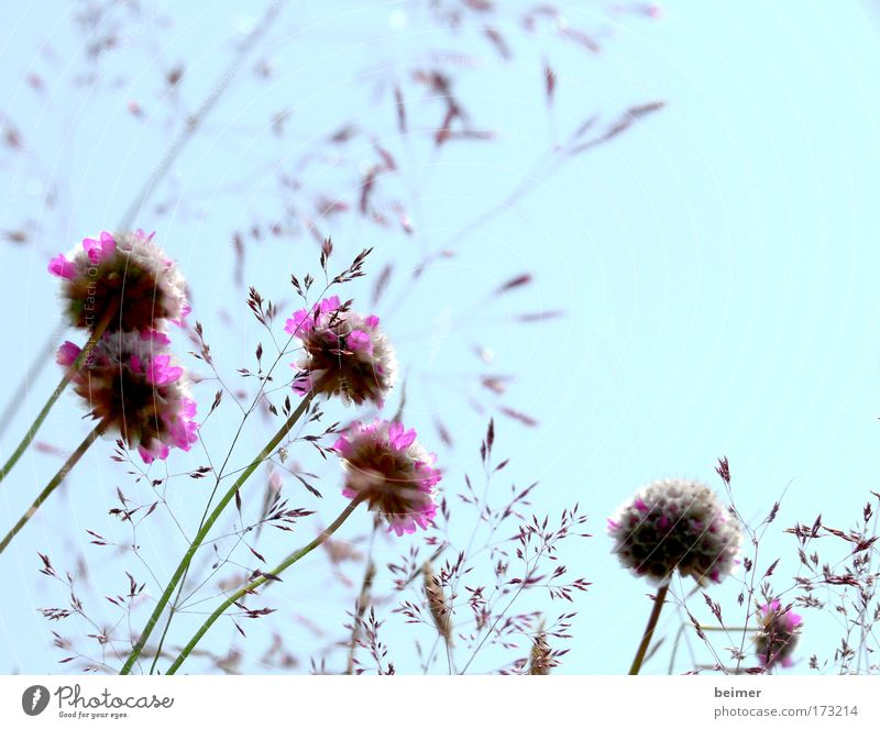 Nature Beautiful Flower Blue Plant Summer Meadow Blossom Grass Field Pink Environment Growth Violet Transience Natural