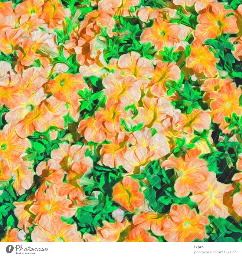 oman flowers and garden painted Beautiful Summer Garden Nature Plant Flower Grass Leaf Blossom Meadow Blossoming Growth Fresh Bright Wild Blue Green Pink Red