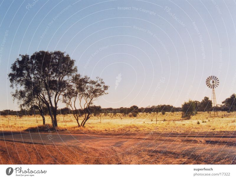 Tree Sand Farm Australia Dust Outback Ranch