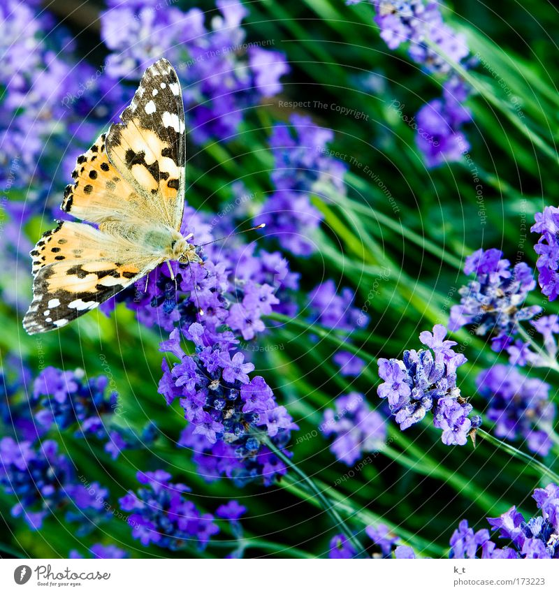 Nature Beautiful Flower Green Plant Summer Calm Animal Yellow Blossom Brown Elegant Flying Esthetic Bushes Near