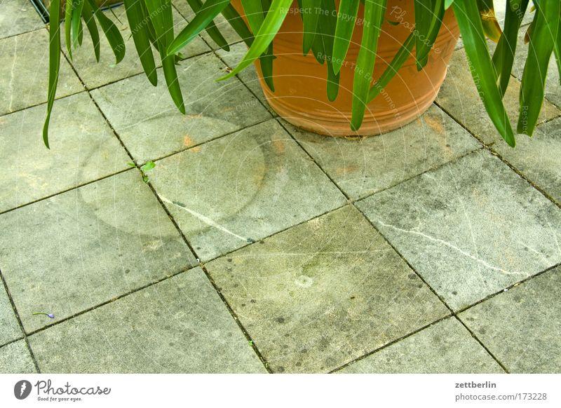 Flower Plant Garden Circle Tracks Square Palm tree Terrace Horticulture Oxygen Flowerpot Foliage plant Paving tiles Imprint Pot plant