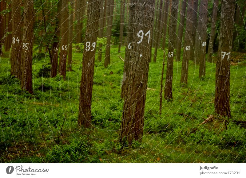 tree counting Colour photo Exterior shot Day Agriculture Forestry Environment Nature Landscape Plant Summer Tree Grass Moss Sign Digits and numbers Green