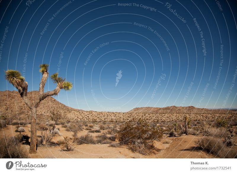 Joshua Tree Landscape Sand Cloudless sky Drought Cactus Wild plant Desert Deserted Calm Americas California Vacation & Travel National Park Adventure
