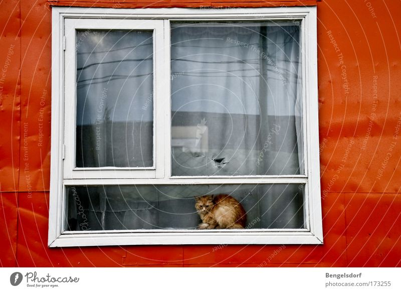 The other side of the world II Window Window board Animal Pet Cat 1 Loneliness Cold Boredom Life Bans Distress Time Sadness Colour photo Exterior shot Deserted