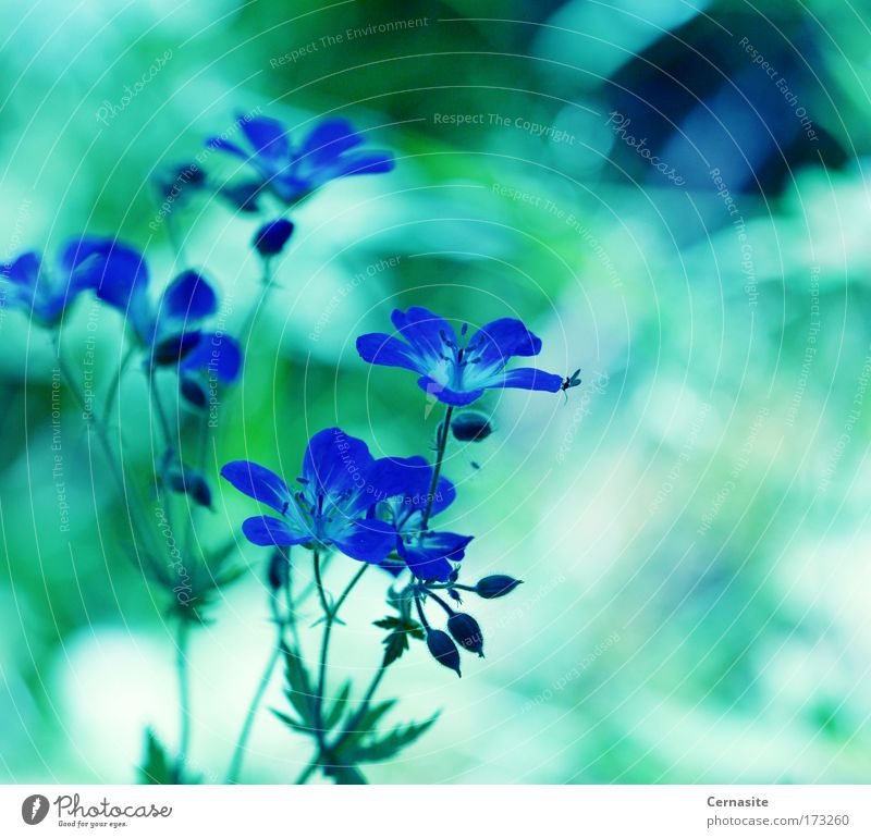 Astral Power Nature Blue Green Beautiful Plant Sun Summer Flower Black Environment Landscape Meadow Warmth Blossom Bright Field