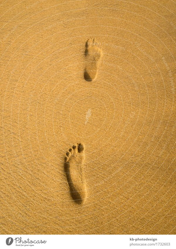 Footprint at the beach in Sri Lanka Relaxation Vacation & Travel Tourism Beach Sand Going sunny footprint footprints barefoot time-out sky landscape landscapes