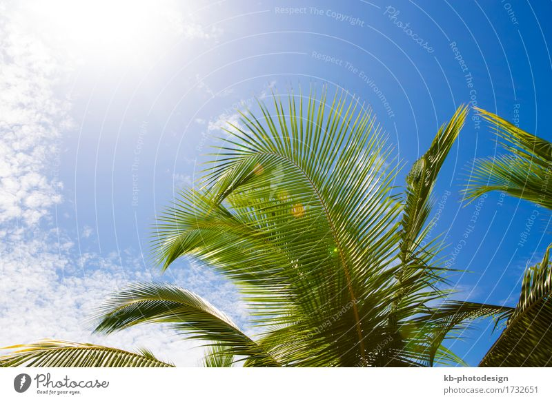 Beautiful palm trees Relaxation Vacation & Travel Plant Virgin forest Growth palms sky Planning plan cloud clouds landscape vacation holiday vacations wood